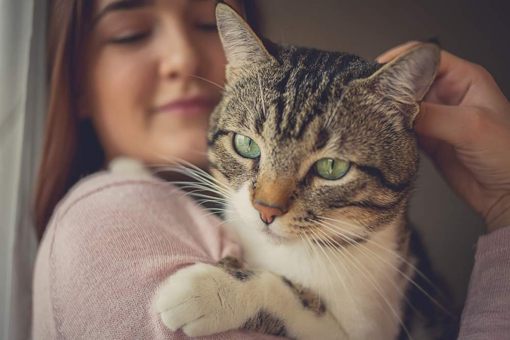 woman holds tabby cat paws protect