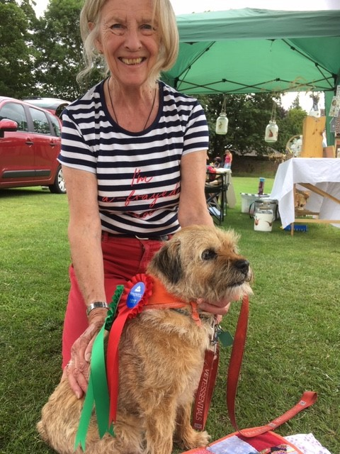 Adopted border terrier meg volunteers for Our Special Friends
