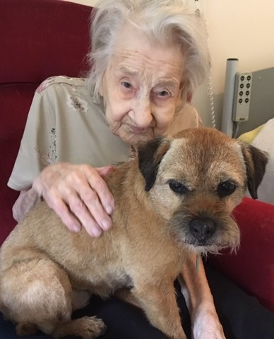 Elderly lady with border terrier on lap